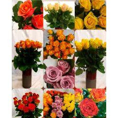 Rosenstrauß - Bunt oder einfarbig
